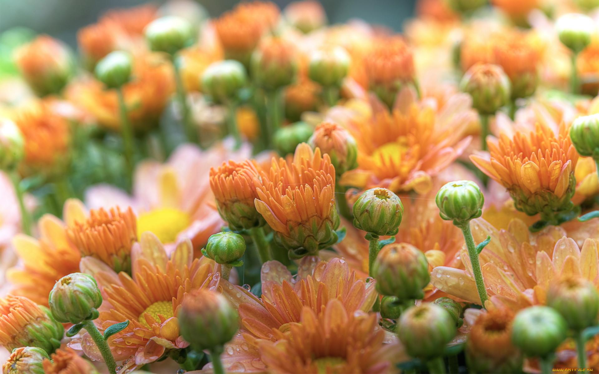высокое качество фото цветы нетерпением жду